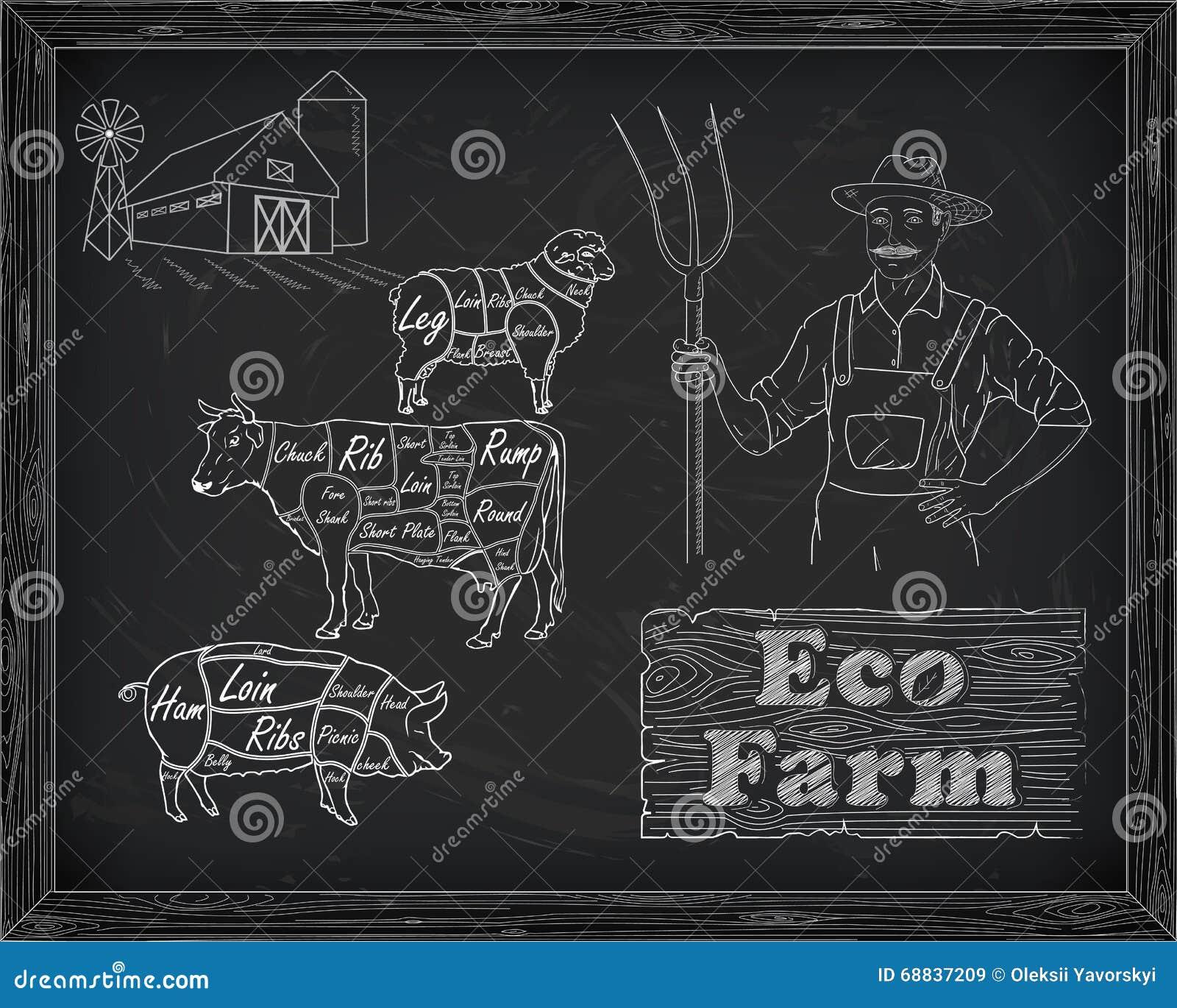 Beautiful Beef Diagram  Pork  Lamb And Farmer Stock Vector