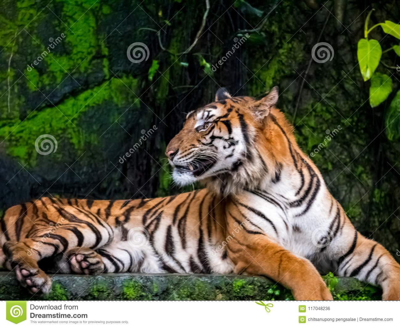Beautiful Bengal tiger, queen tiger in forest show action nature.