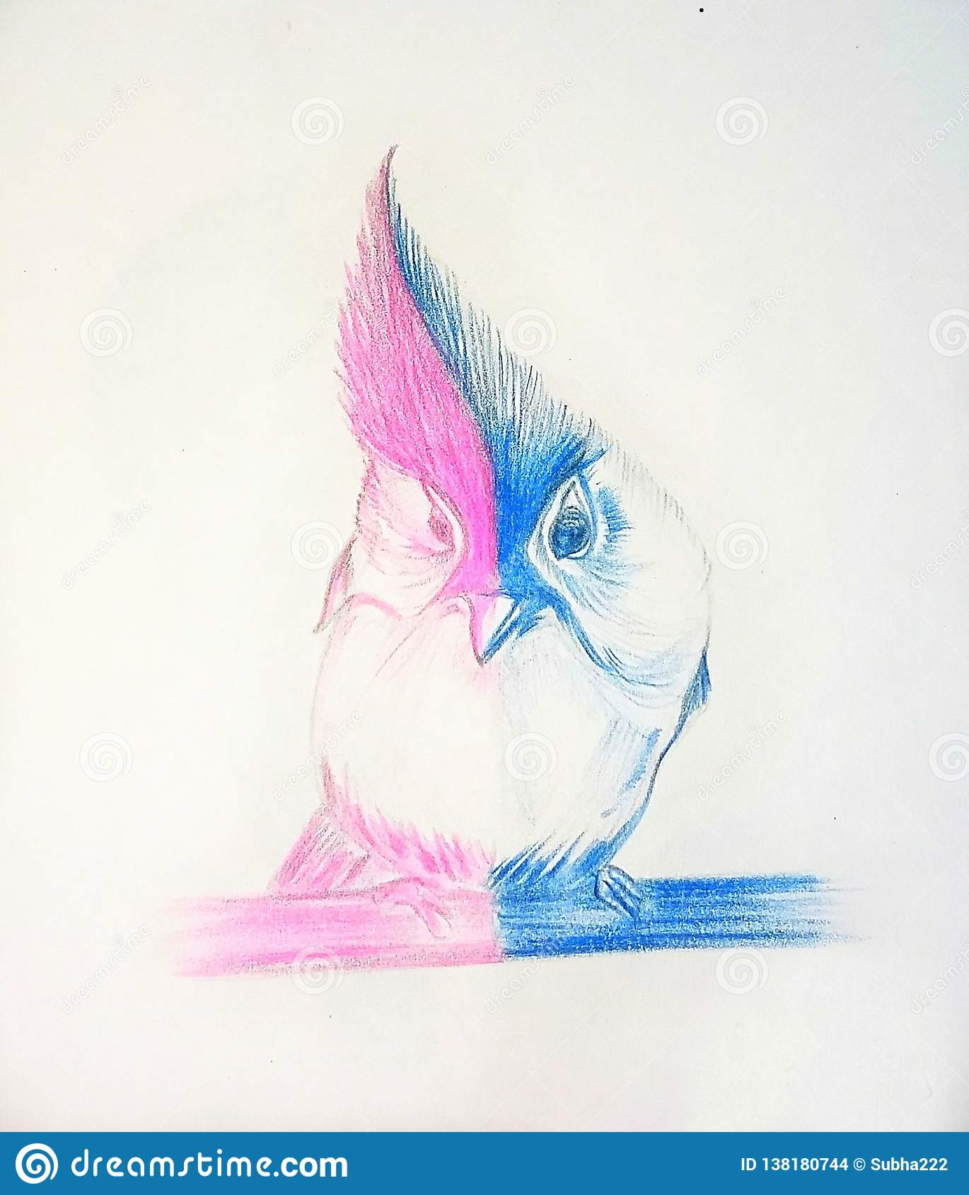 Beautiful bird with colour pencil sketching stock illustration