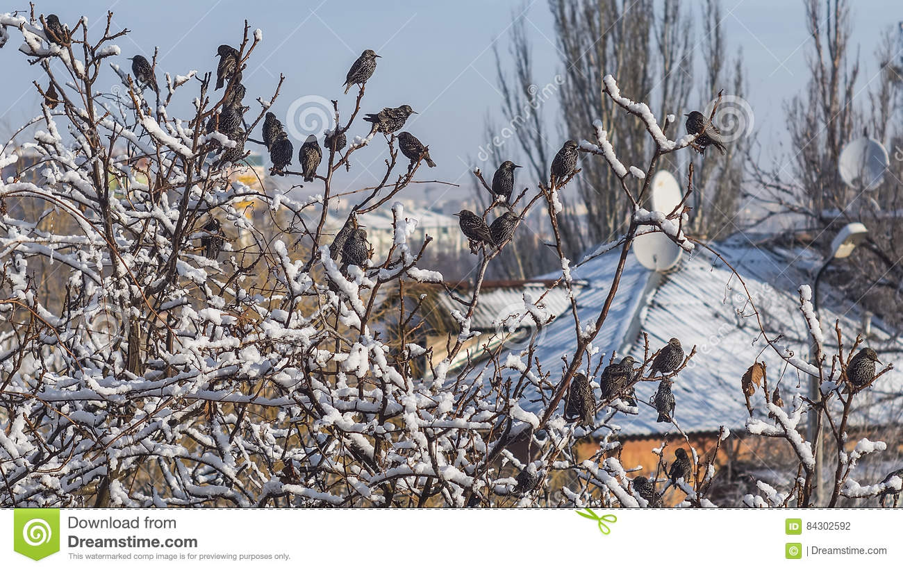 beautiful birds sitting on the tree branch covered by snow stock