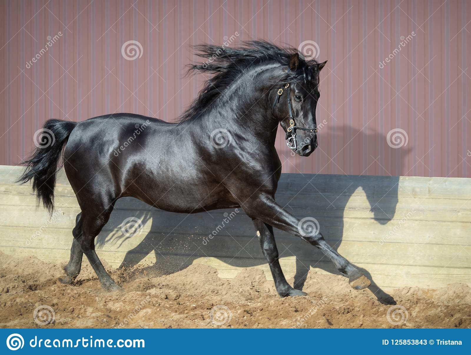 32 244 Running Horse Photos Free Royalty Free Stock Photos From Dreamstime