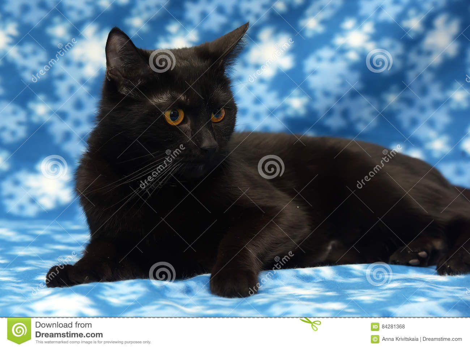 harry potter cat costume