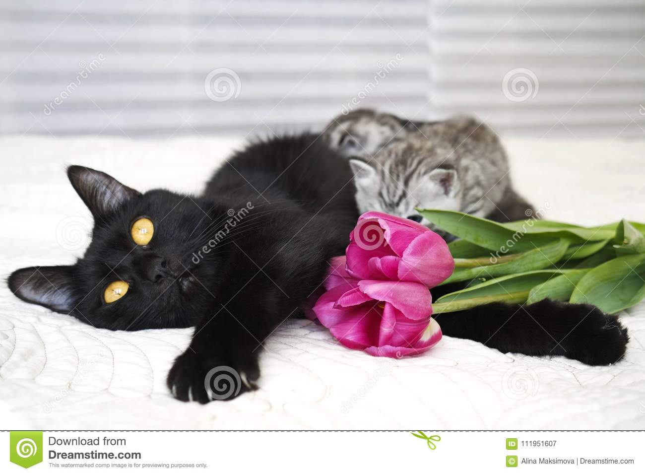 Beautiful Black Cat With Kittens Stock Image Image Of Kittens Flower 111951607