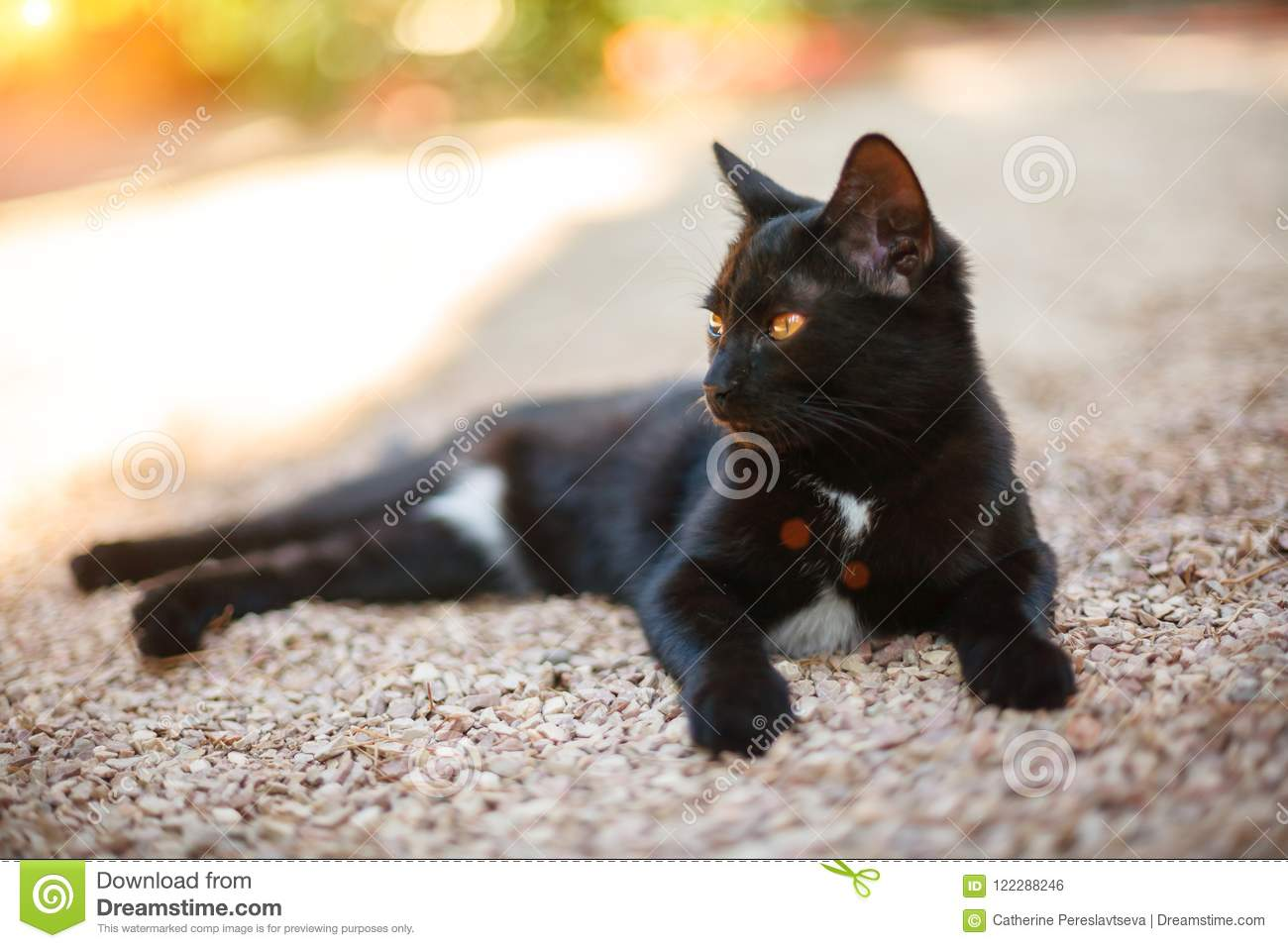 Beautiful black cat lying on the road