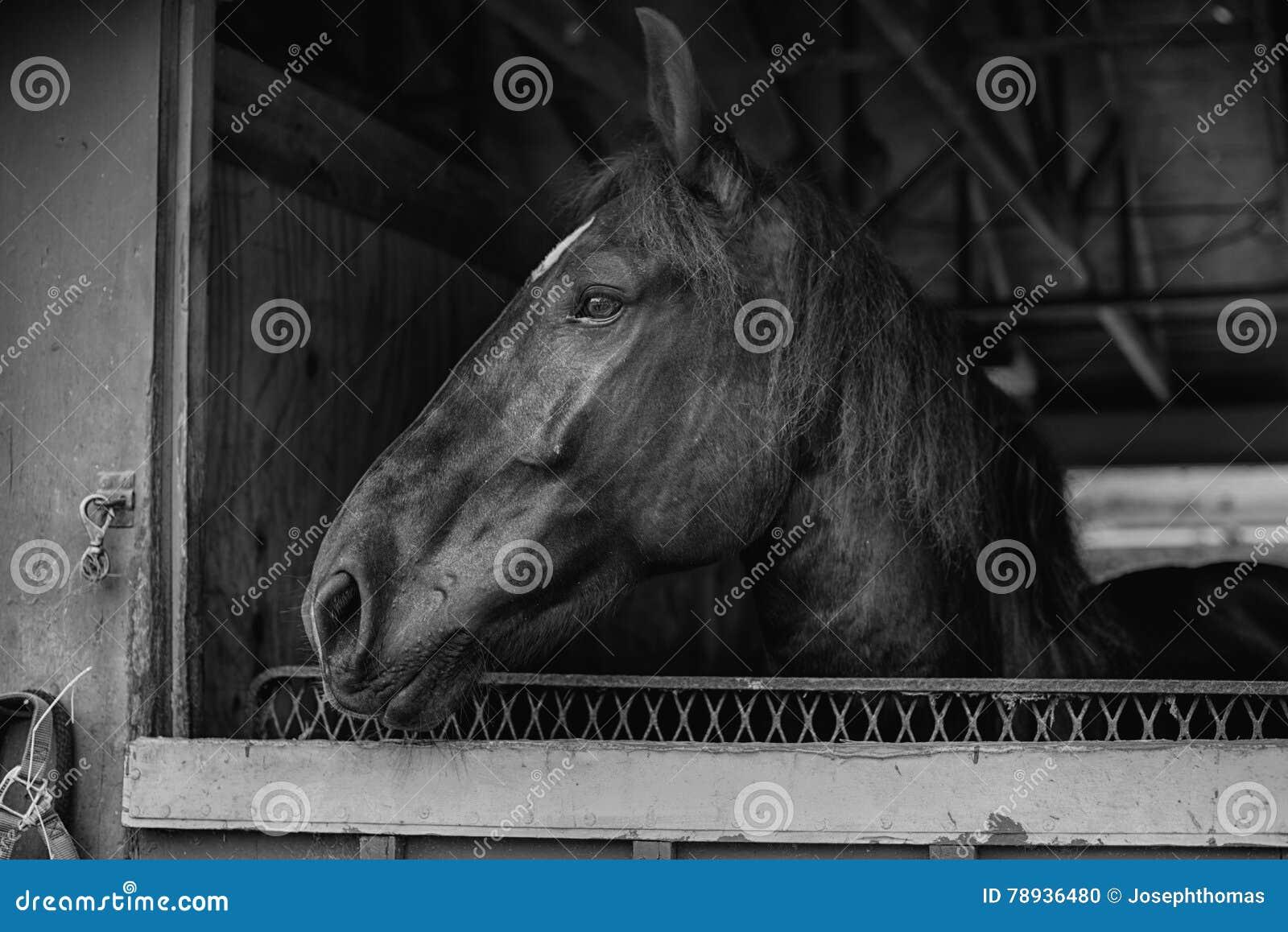Black horse face close up - photo#48