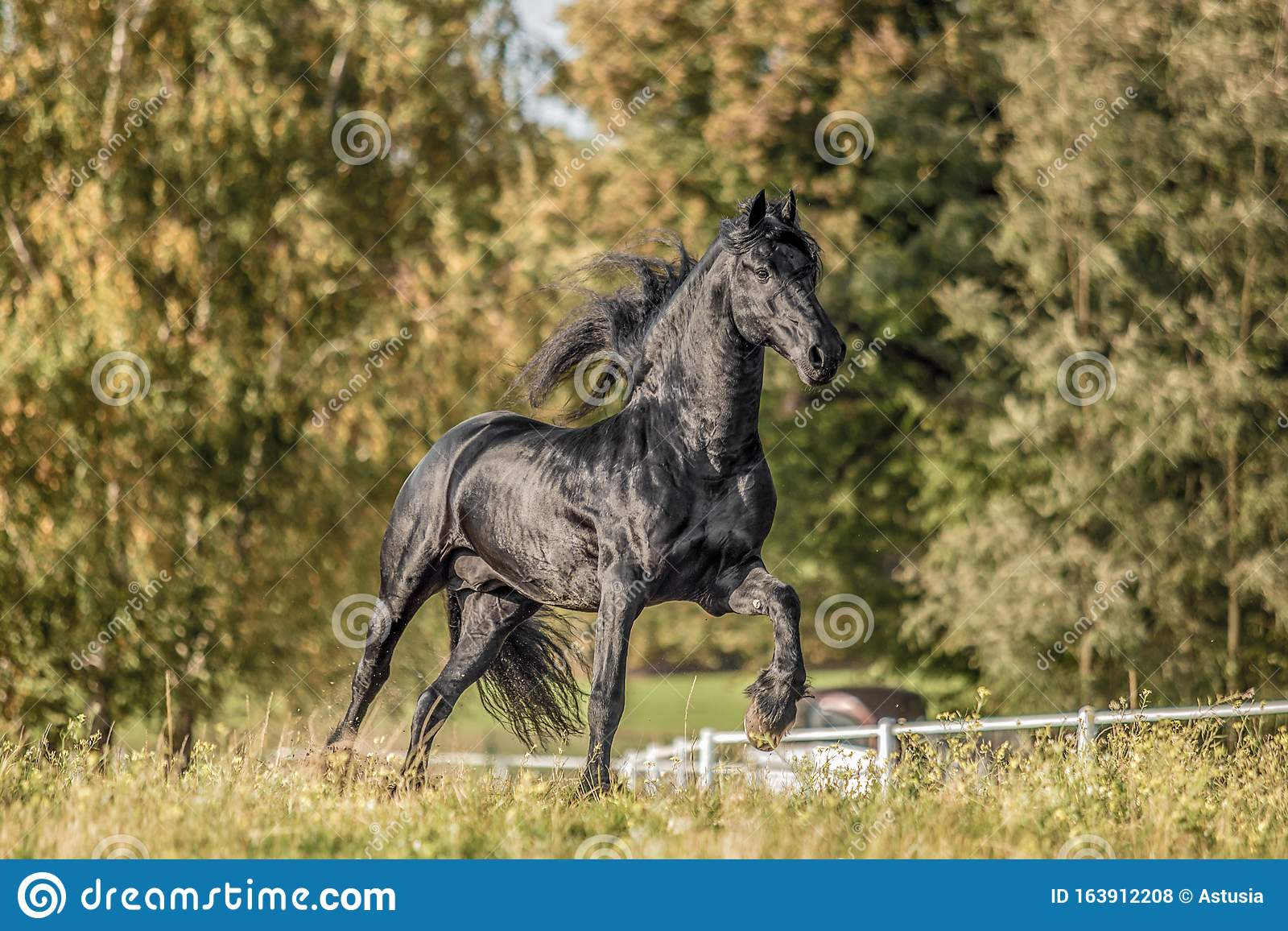 Beautiful Black Horse The Friesian Stallion Gallops On The Autumn Meadow Stock Photo Image Of Nature Freedom 163912208