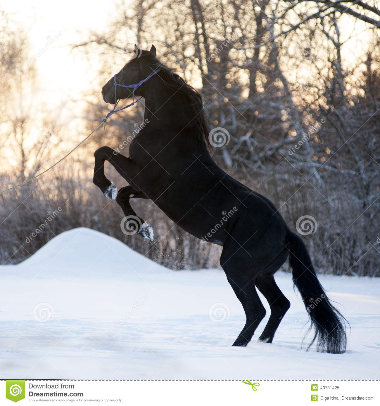 5 410 Black Horse Winter Photos Free Royalty Free Stock Photos From Dreamstime
