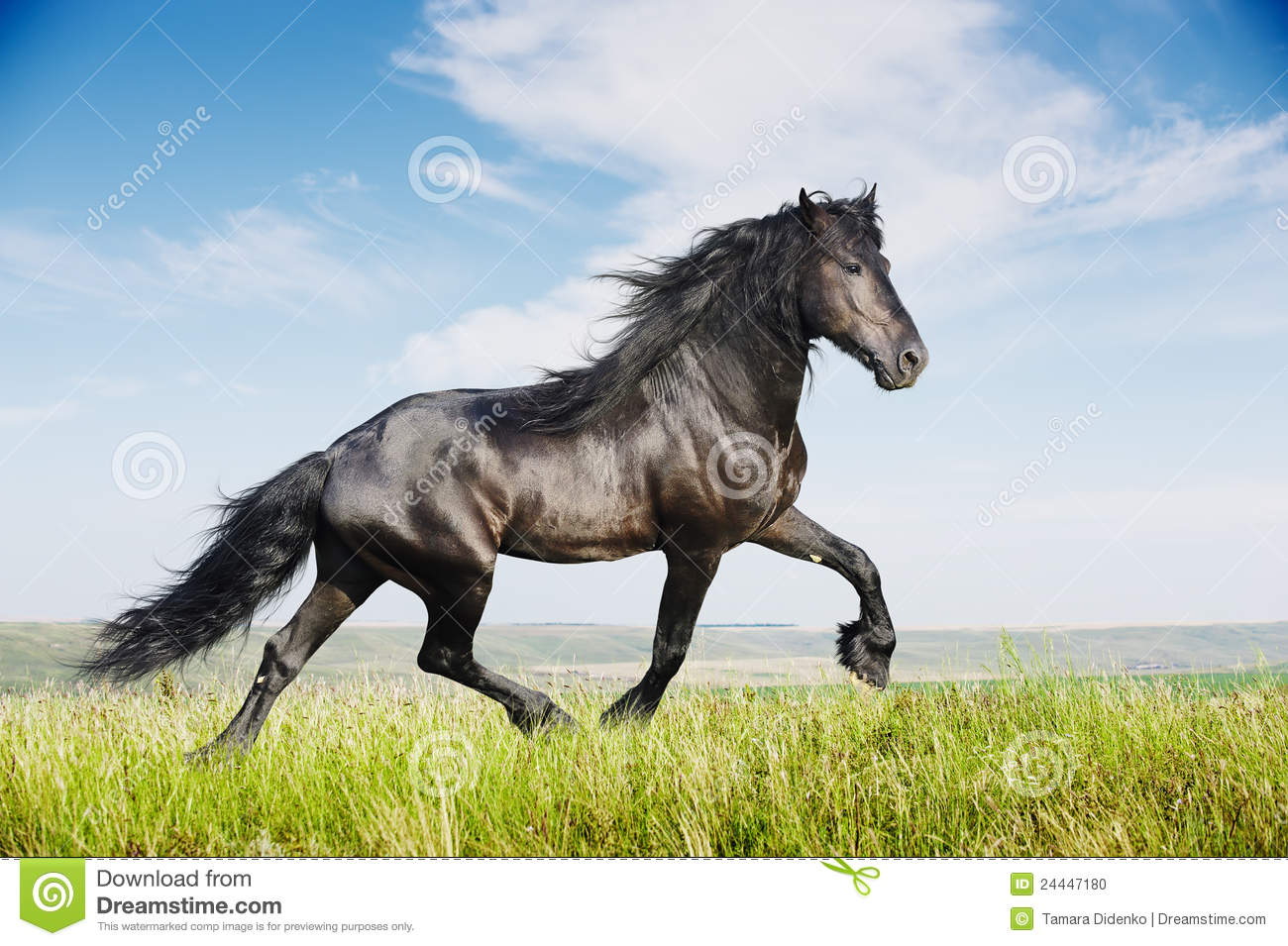 Beautiful Black Horse Running Trot Stock Photo Image Of Equestrian Blue 24447180