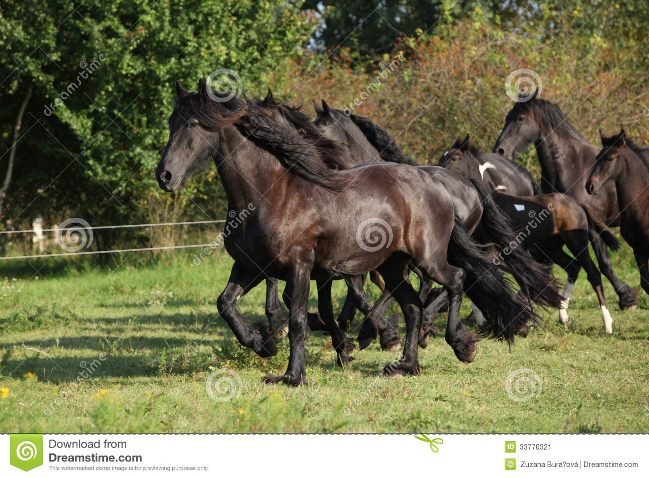 Black Horse Running Stock Photos, Pictures & Royalty-Free ...  |Friesian Horses Running