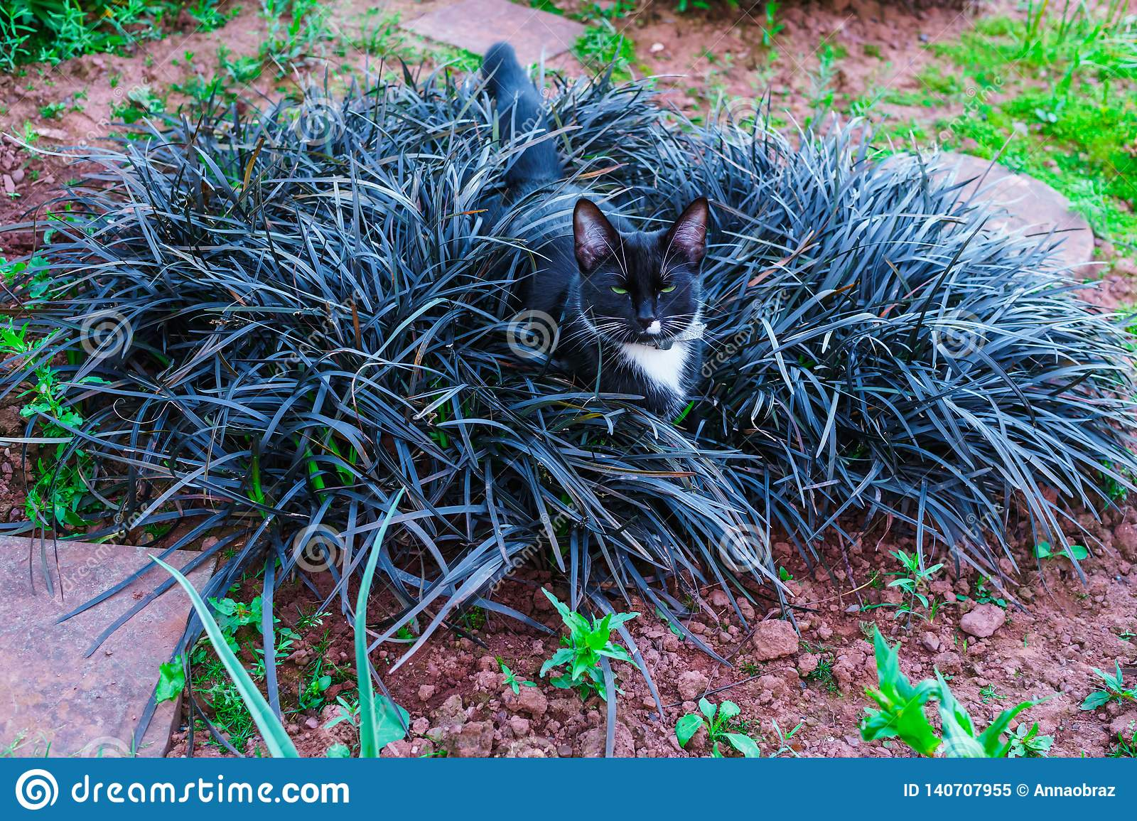 A beautiful black kitty hiding in a decorative flowerbed in the garden