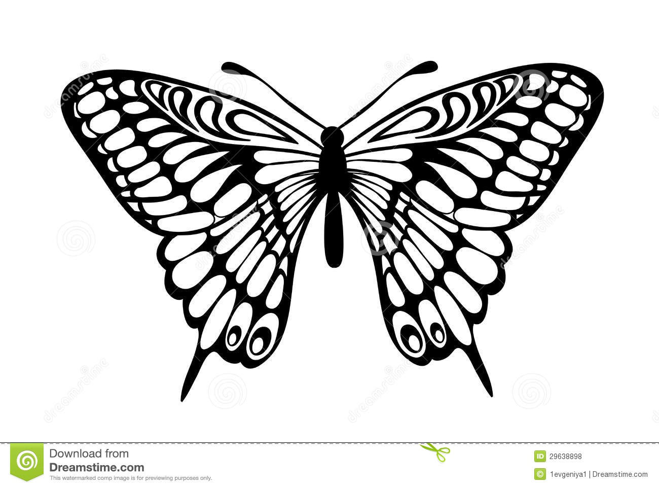 beautiful black and white butterfly isolated on white royalty free