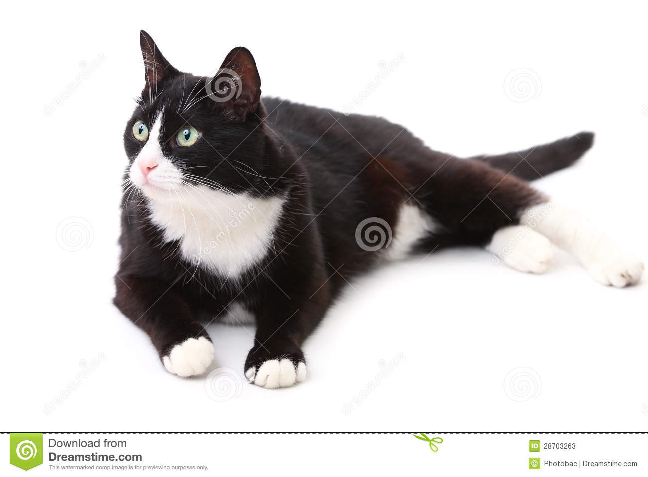 What To Name A Cat With White Paws