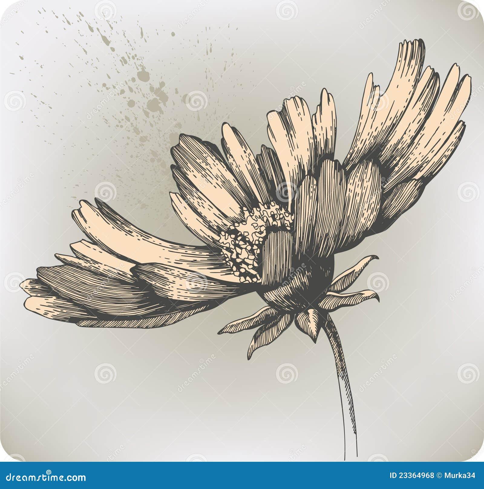 Beautiful blooming flowers hand drawing vector i stock vector download comp izmirmasajfo