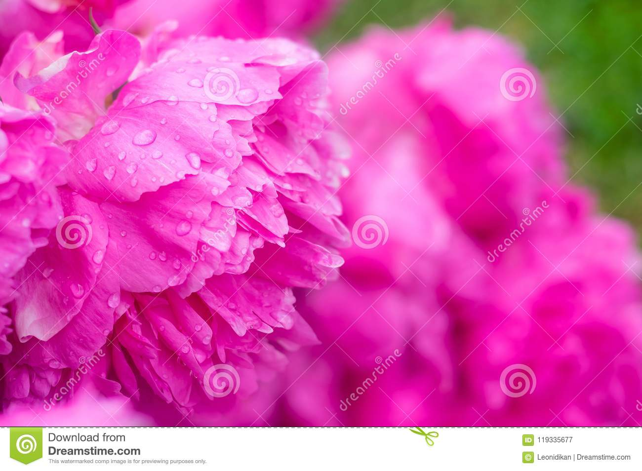 Floral Background With Water Drops Stock Image Image Of Beautiful