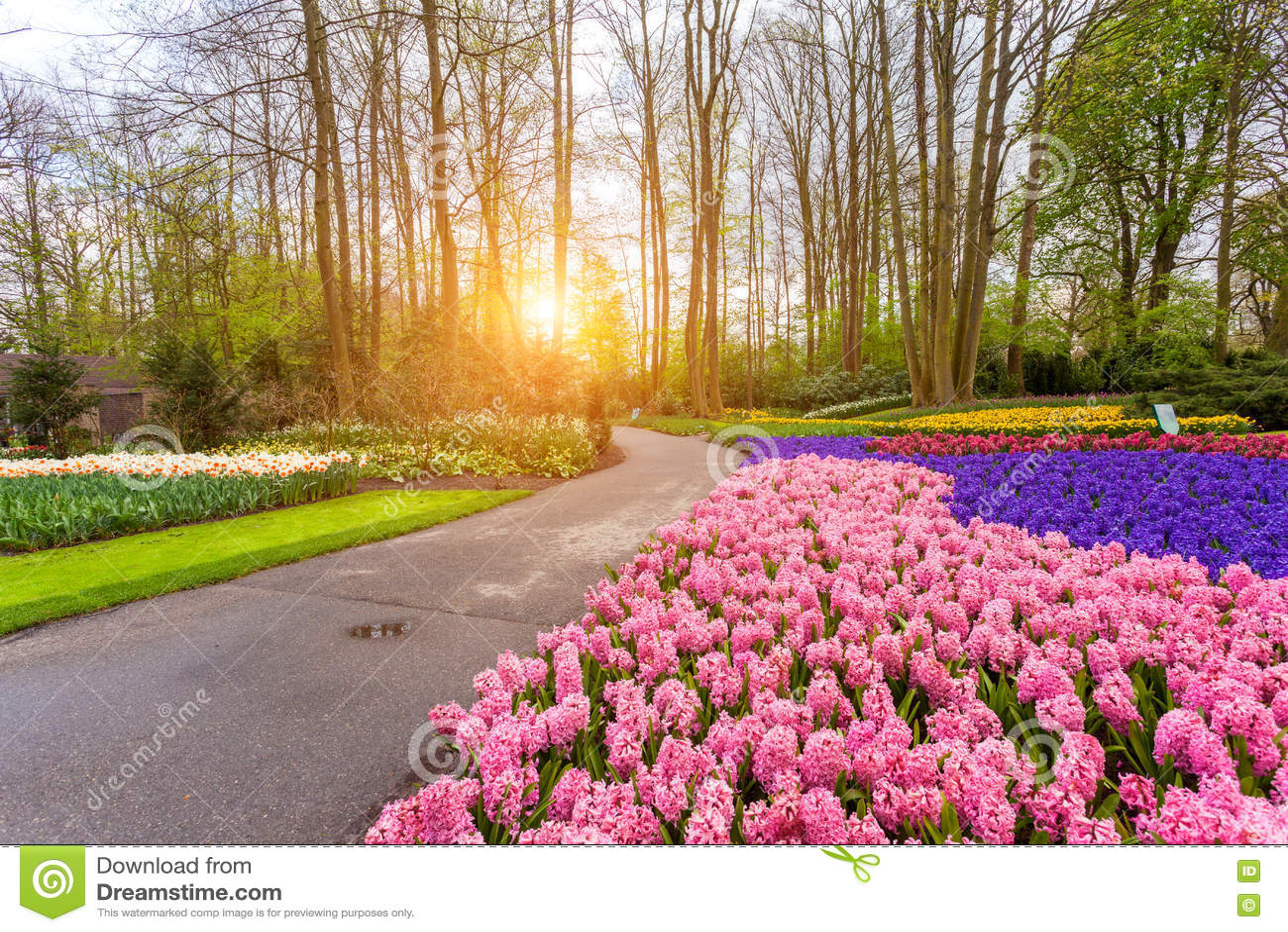 Beautiful Blooming Flowers At Sunset In Keukenhof Park In