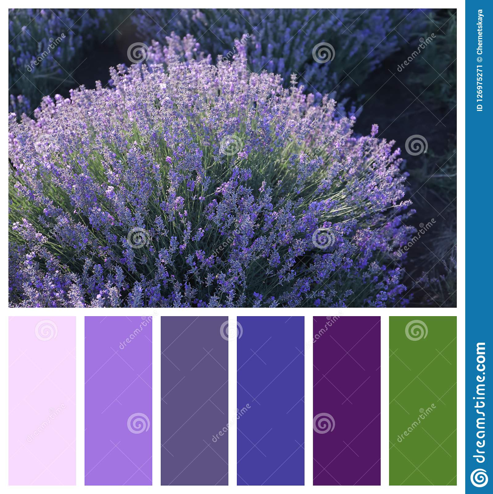 Beautiful blooming lavender in field. Natural color palette for interior or fashion design