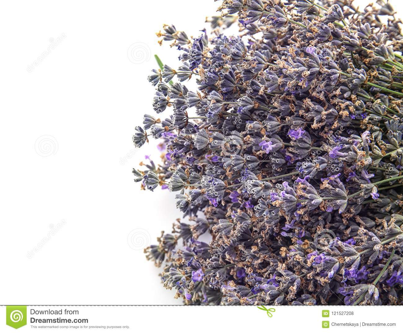 Beautiful blooming lavender flowers