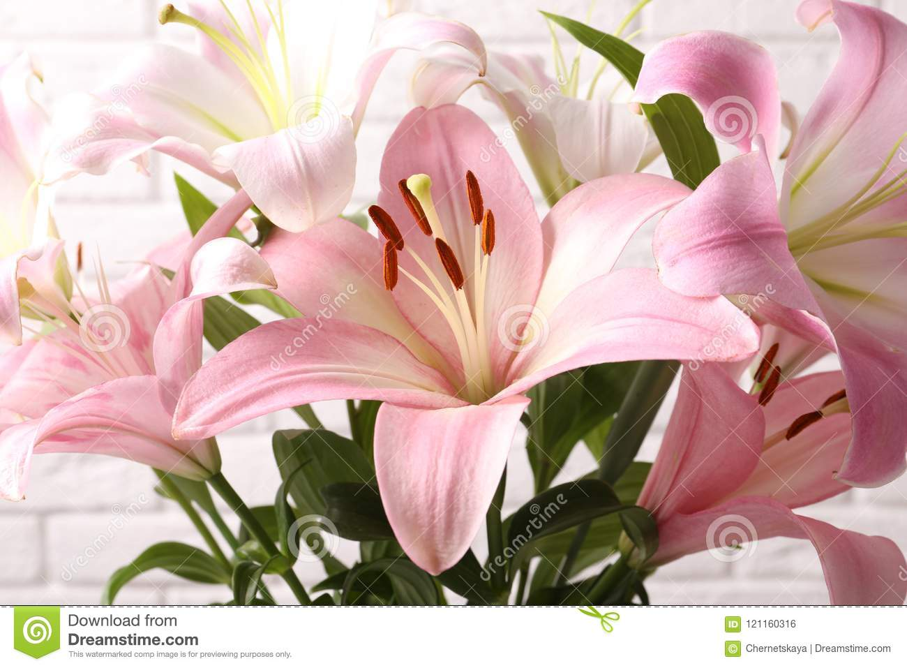 Beautiful Blooming Lily Flowers Stock Photo Image Of Delicate