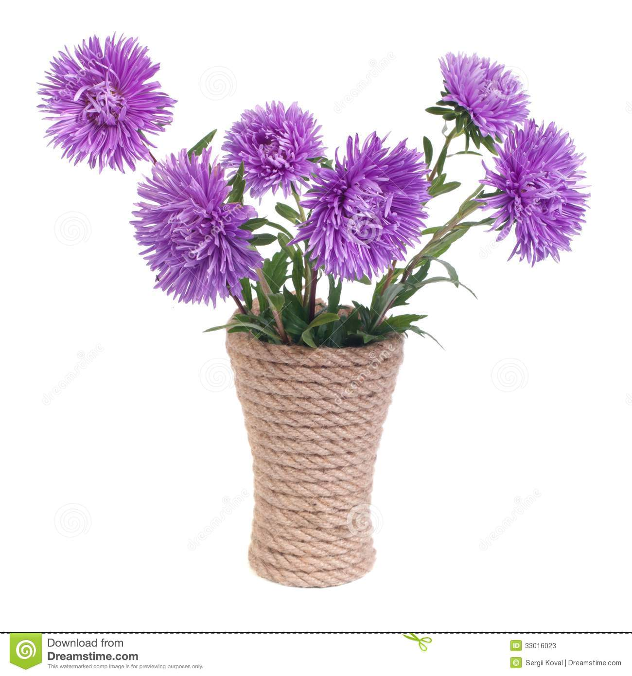 The Beautiful Blue Aster Flowers In A Vase Stock Image
