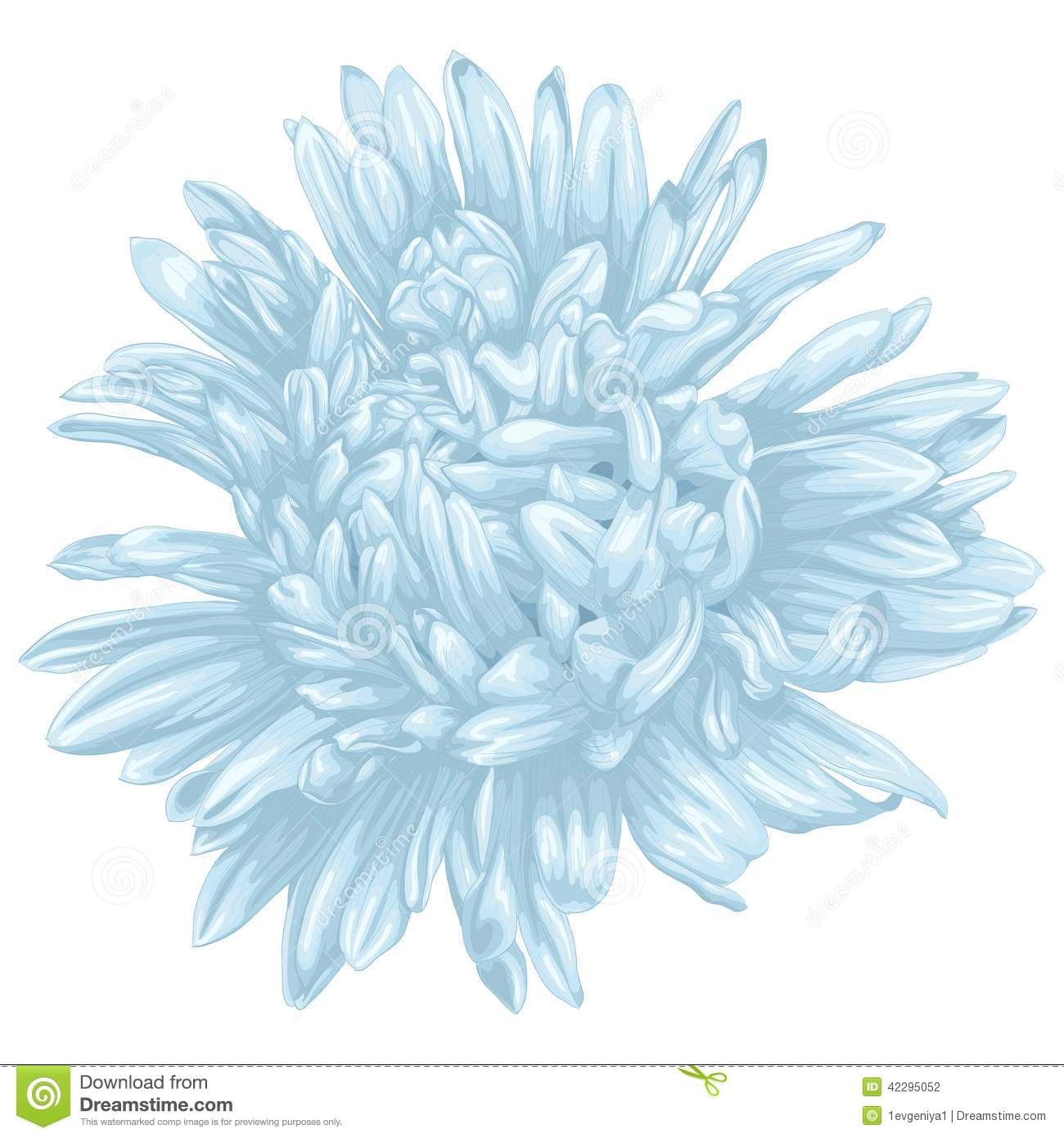 Aster Flower Line Drawing : Beautiful blue aster isolated on white background stock