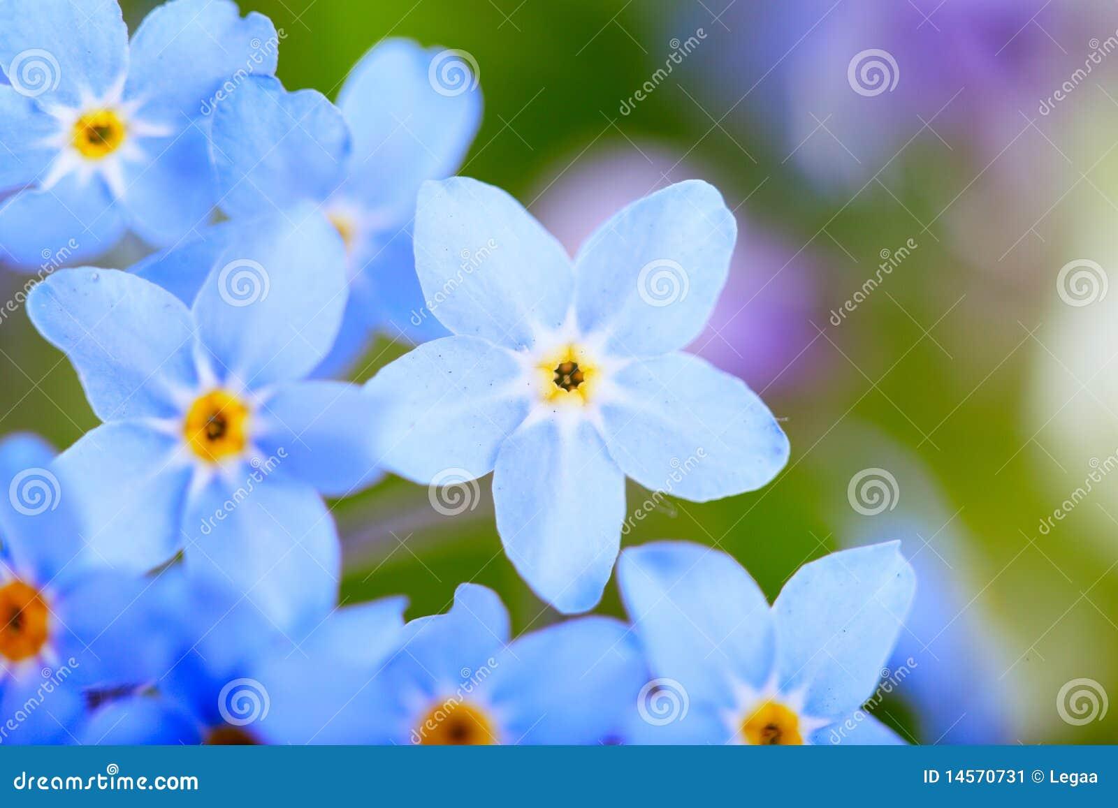 Beautiful Blue Flowers Super Macro Stock Image Image Of Botanic
