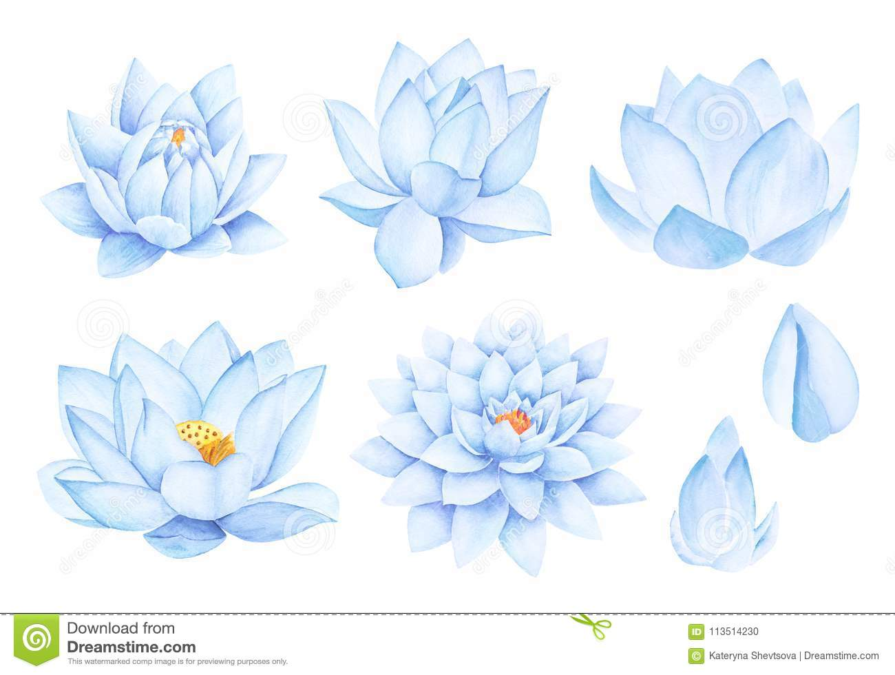 Beautiful Blue Lotus Flowers Watercolor Illustration Pure Water
