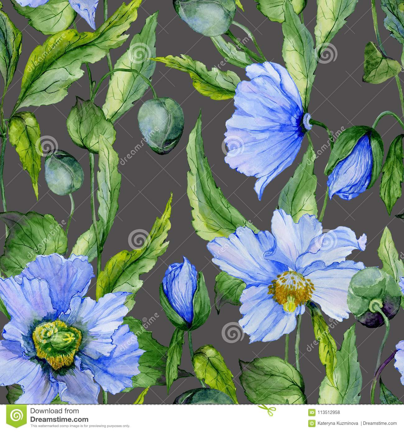 Beautiful Blue Poppy Flowers With Green Leaves On Dark Gray