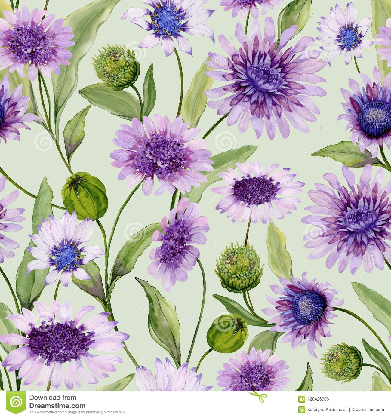 Beautiful Blue And Purple Daisy Flowers With Closed Buds And Leaves
