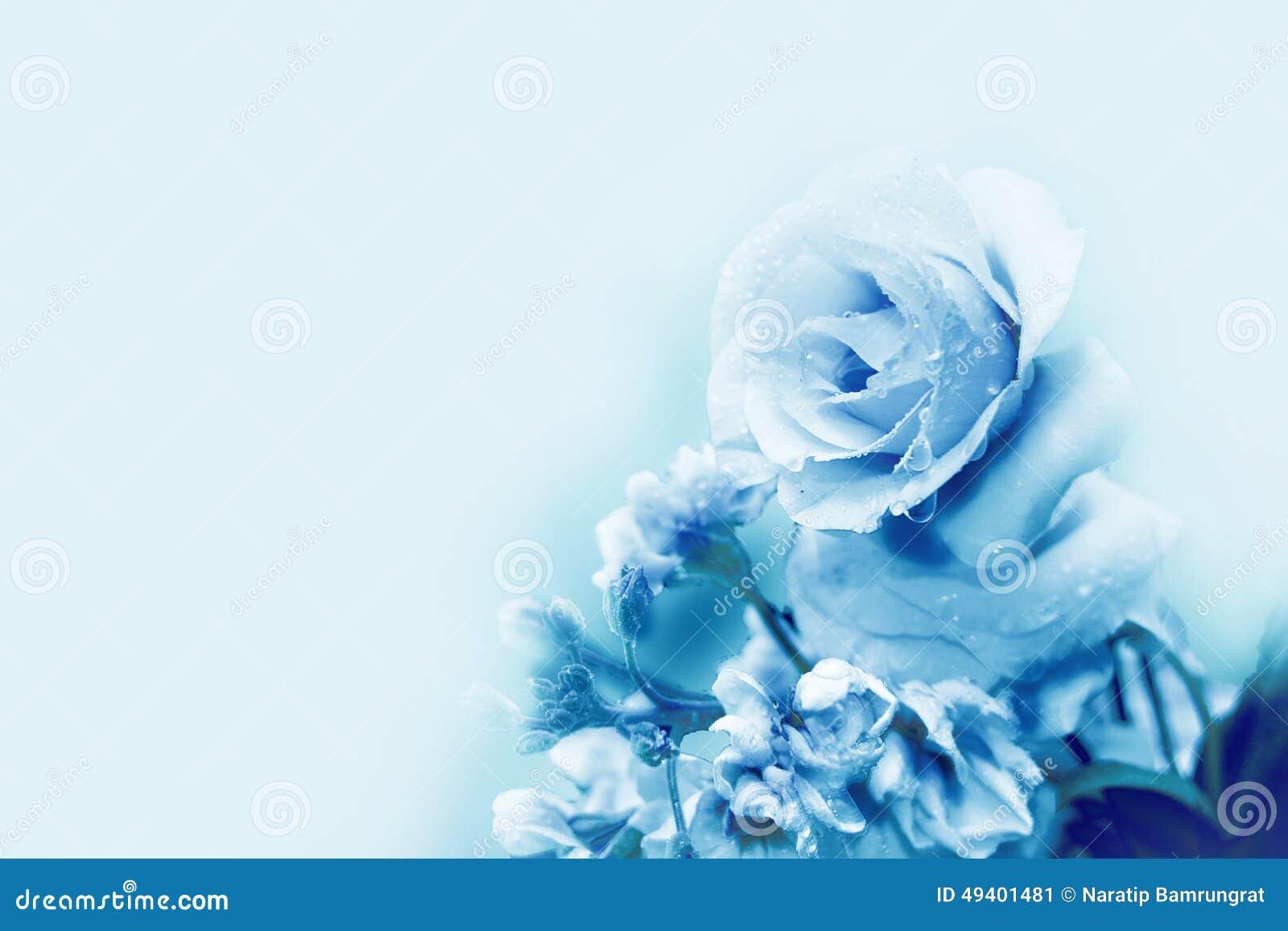 beautiful blue rose in magic light spring stock image