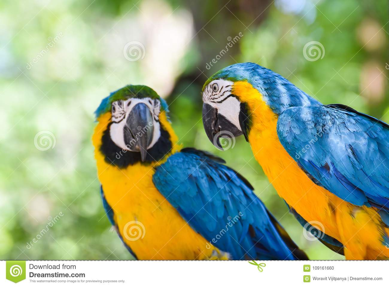 Beautiful Blue and yellow macaw birds parrot