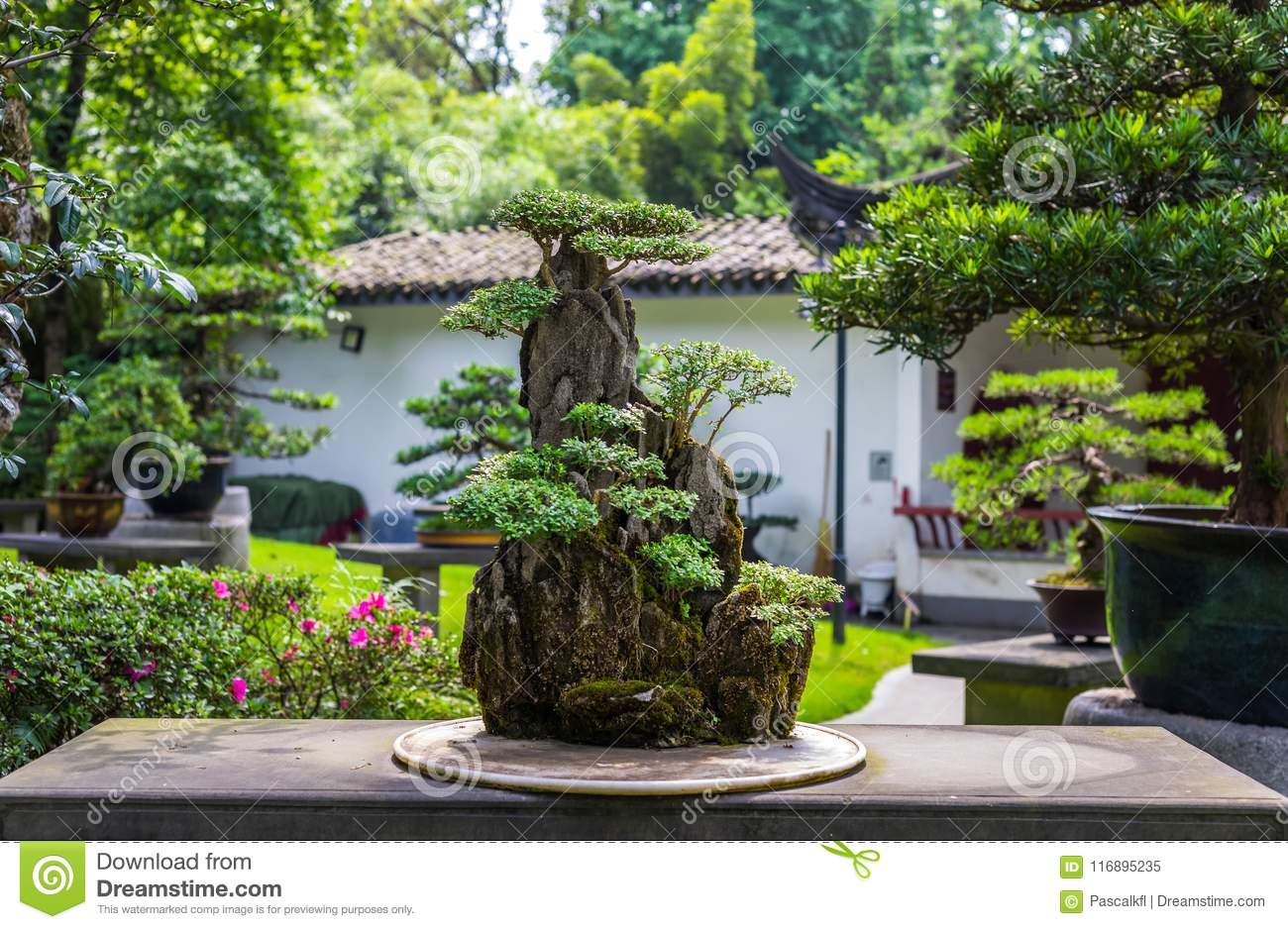 Beautiful Bonsai Tree In A Japanese Garden During Day Stock
