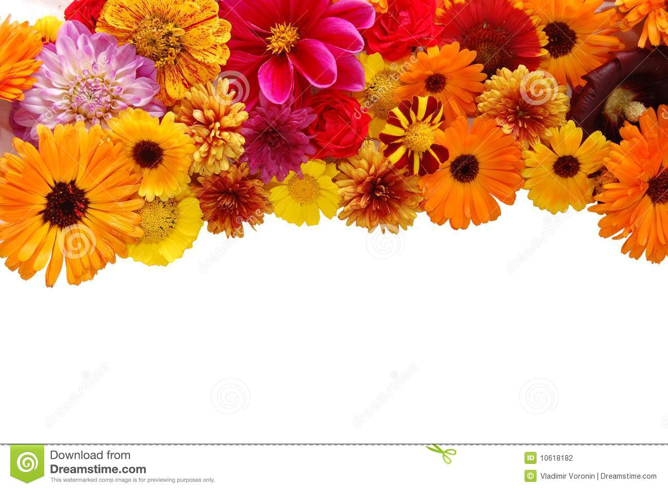 Download Beautiful Border From Fresh Flowers Stock Photo