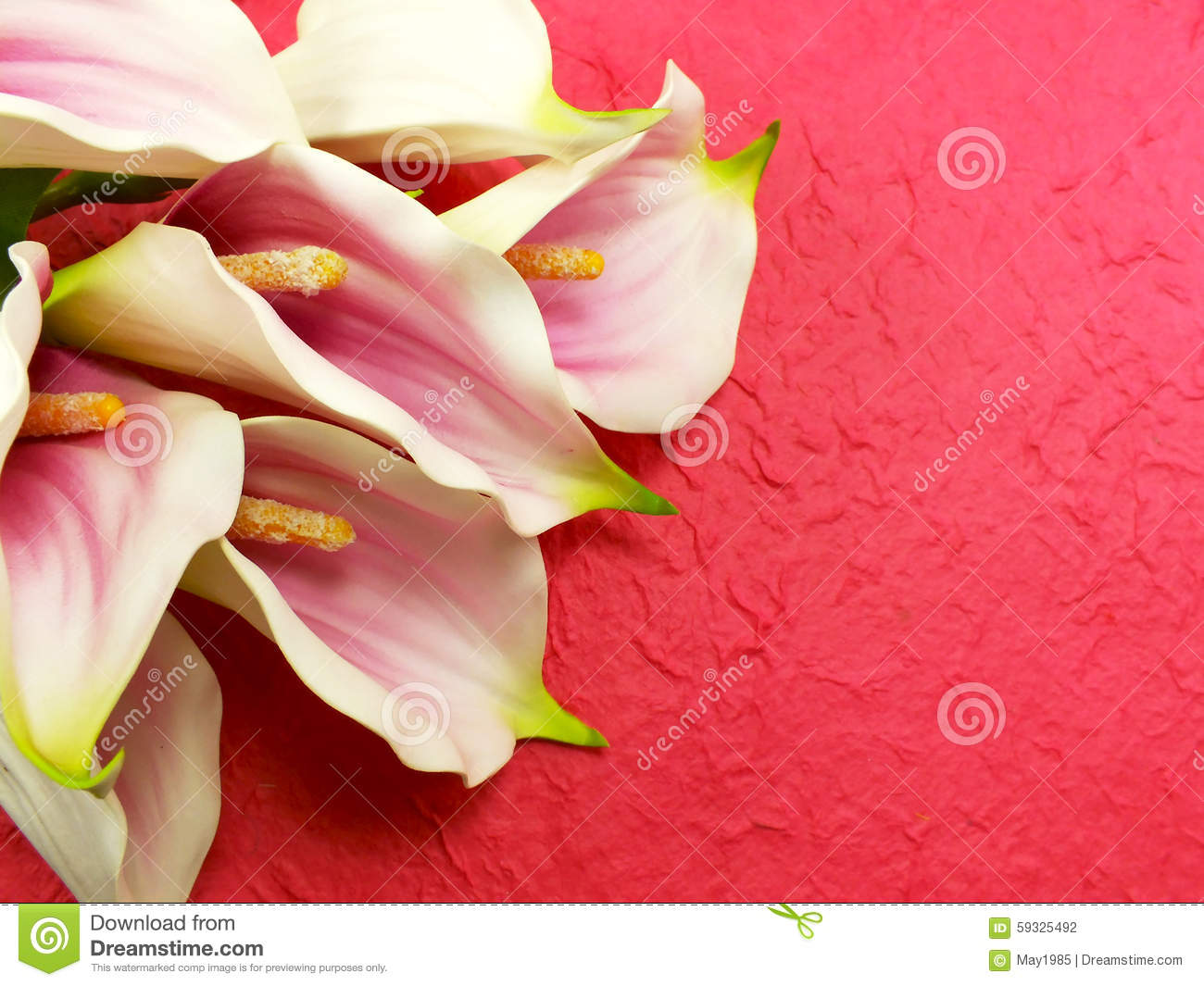 Beautiful Bouquet Of Calla Lily Flowers On Pink Background Stock