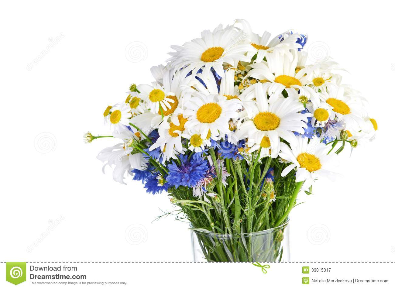 Beautiful bouquet of daisies in vase stock image image of green royalty free stock photo reviewsmspy