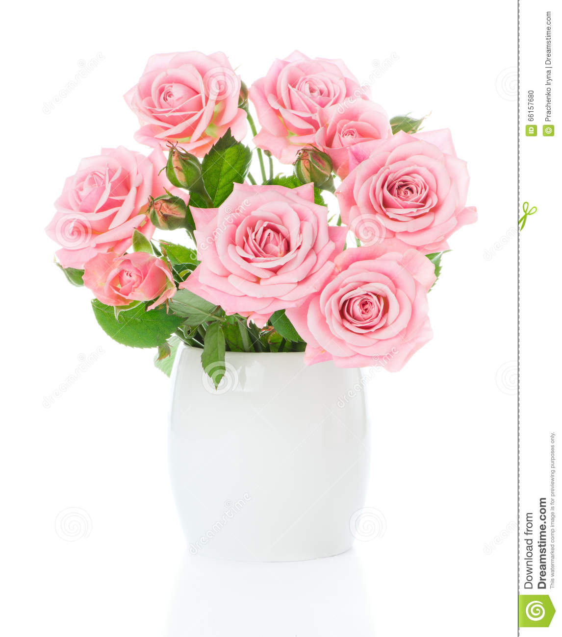 Beautiful Bouquet Of Fresh Pink Roses In A White Vase Stock Photo