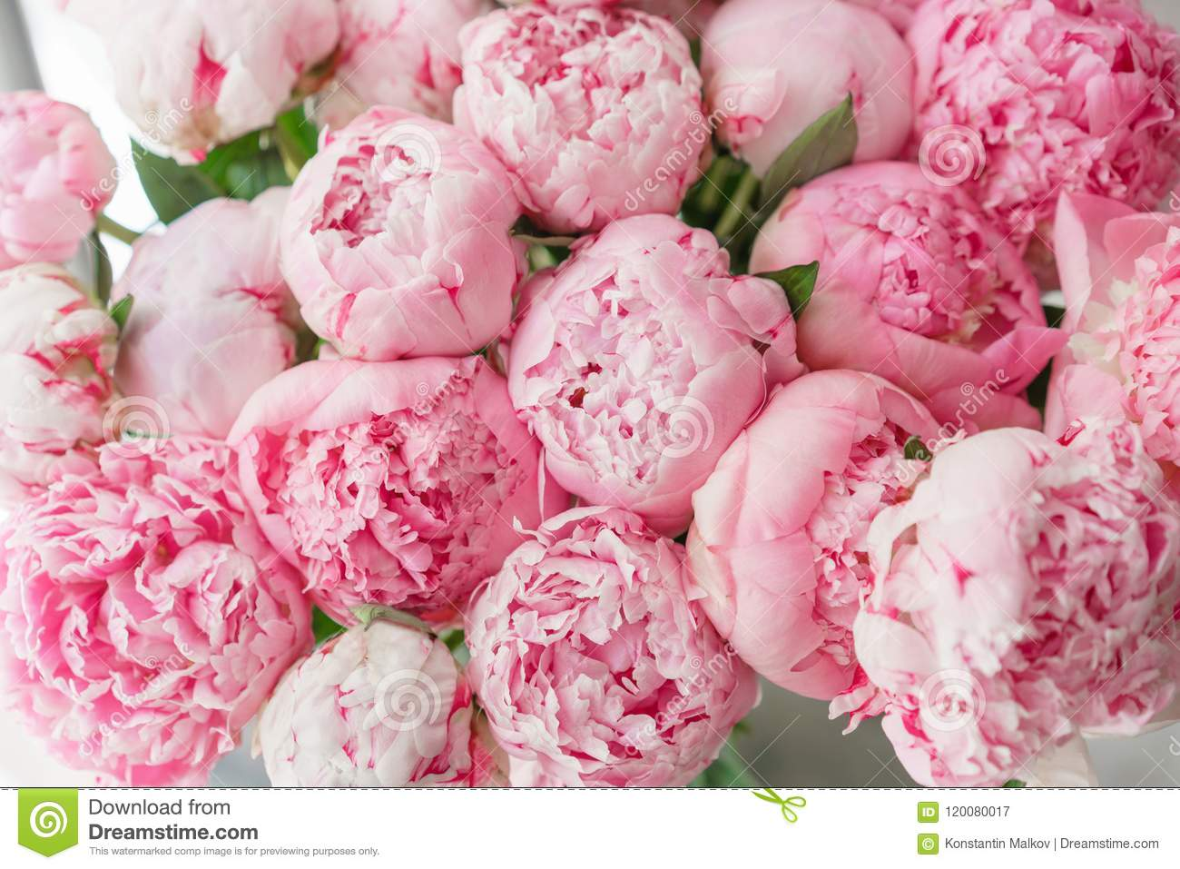 beautiful bouquet of pink peonies . floral composition, daylight