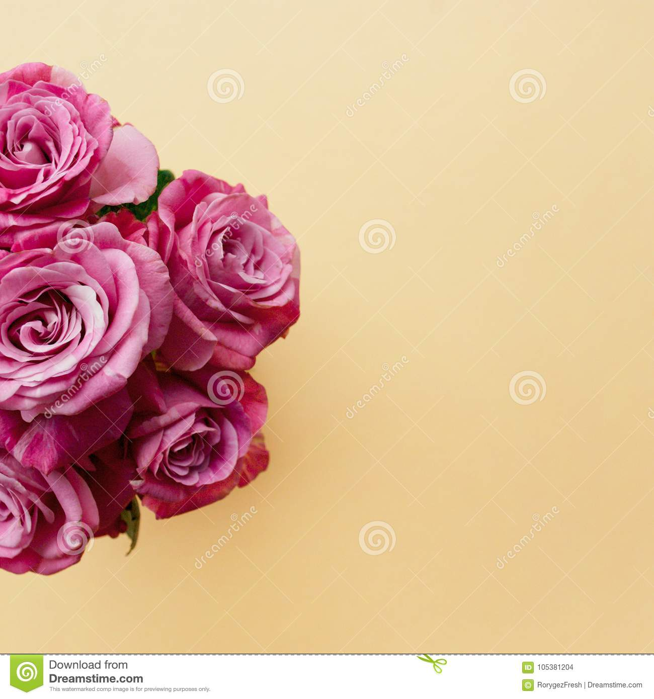 Beautiful bouquet of pink roses on a pale peach pastel background.
