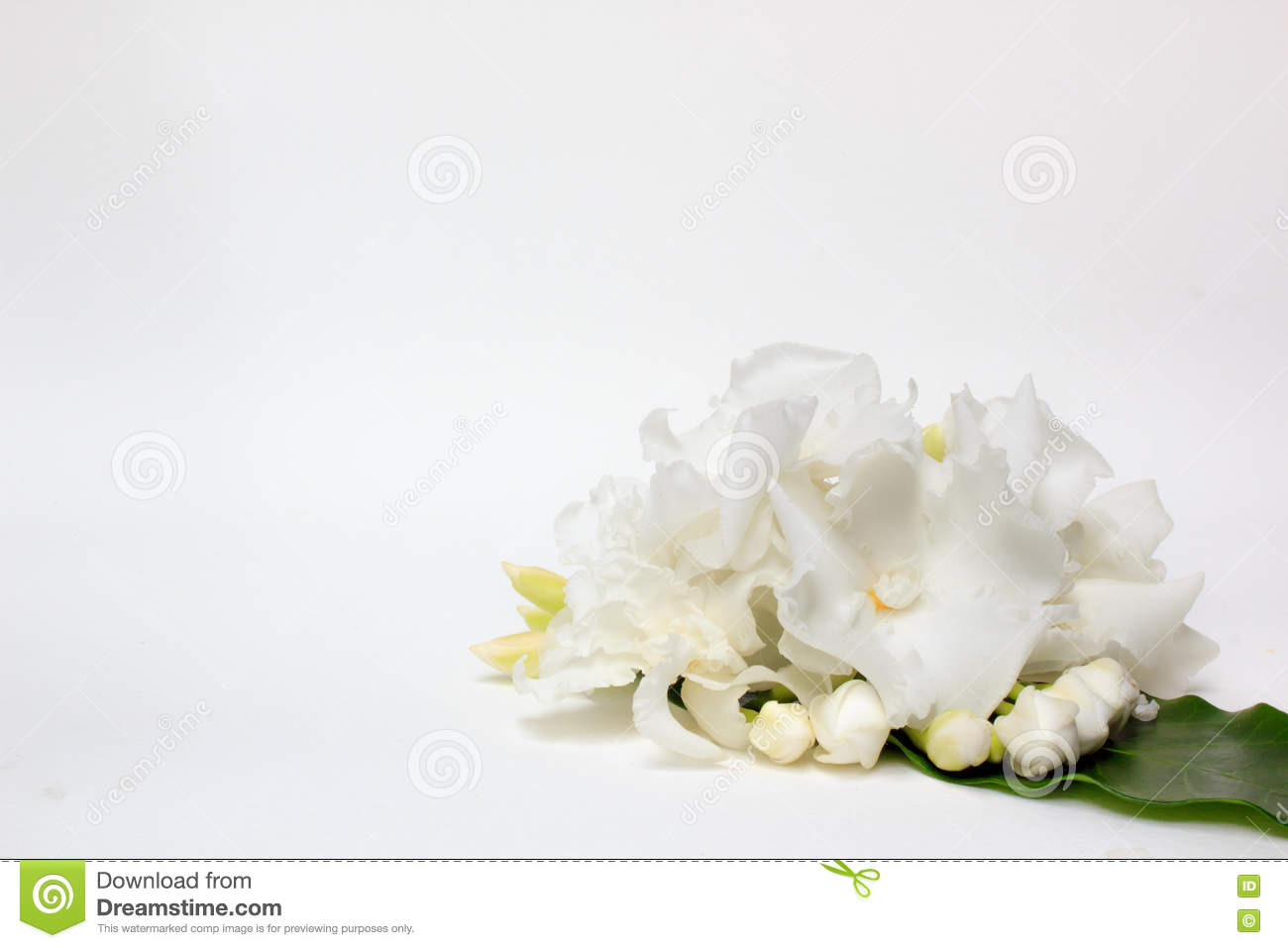 Beautiful bouquet of white gardenia jasminoides flower stock photo beautiful bouquet of white gardenia jasminoides flower or cape jasmine with bud isolated on a white background with copy space izmirmasajfo