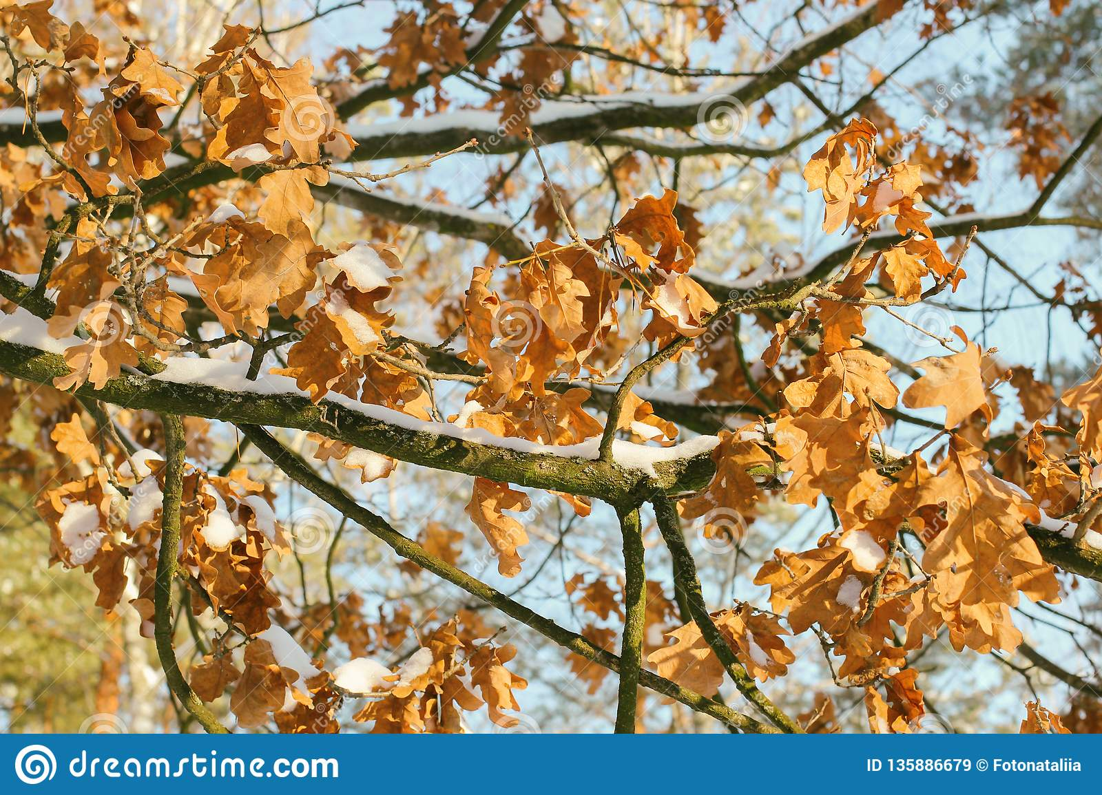 Beautiful Branch With Orange And Yellow Leaves In Late Fall