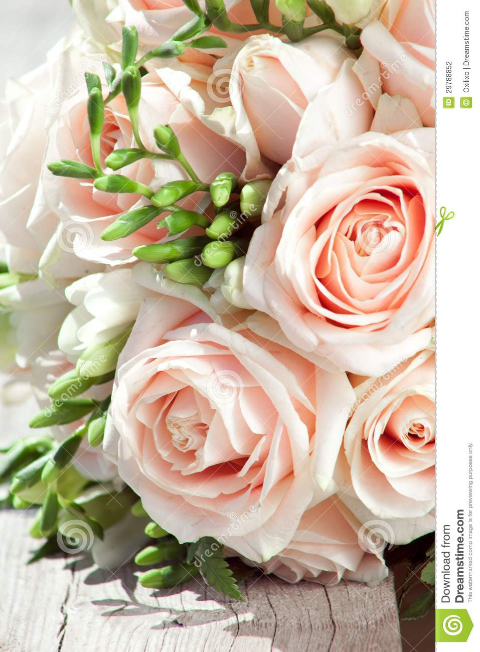 Wedding Bouquet Of White Freesias And Pink Roses Stock