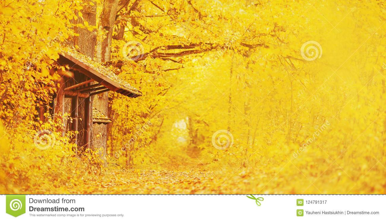 Beautiful bright autumn panoramic landscape. Yellow and orange trees in forest. Autumn leaves fall from branches on a sunny day.