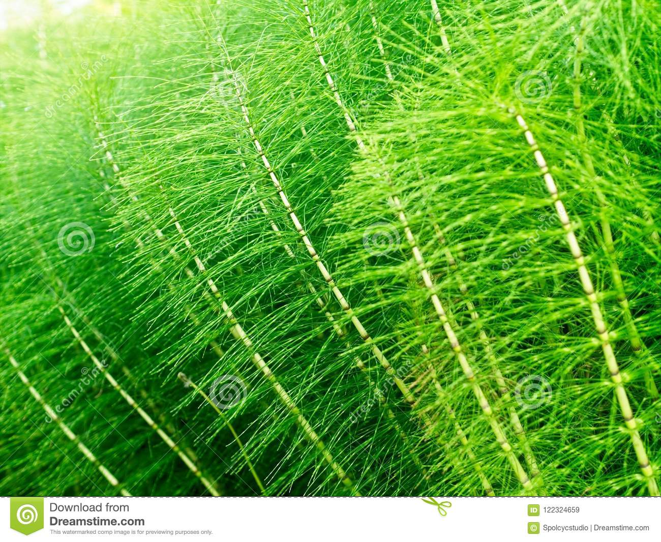 Abstract Bright Green Plants Background Stock Image Image Of Design America 122324659