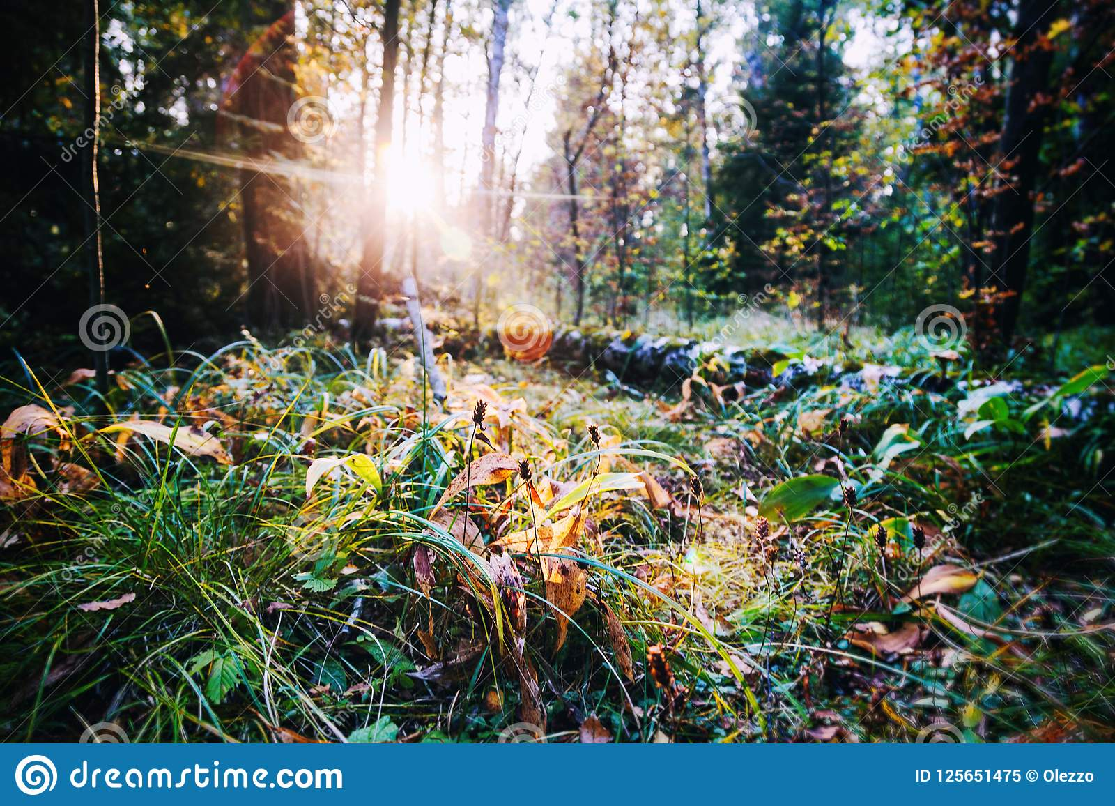 Beautiful bright sunset in a wild forest, beautiful scenery, nat