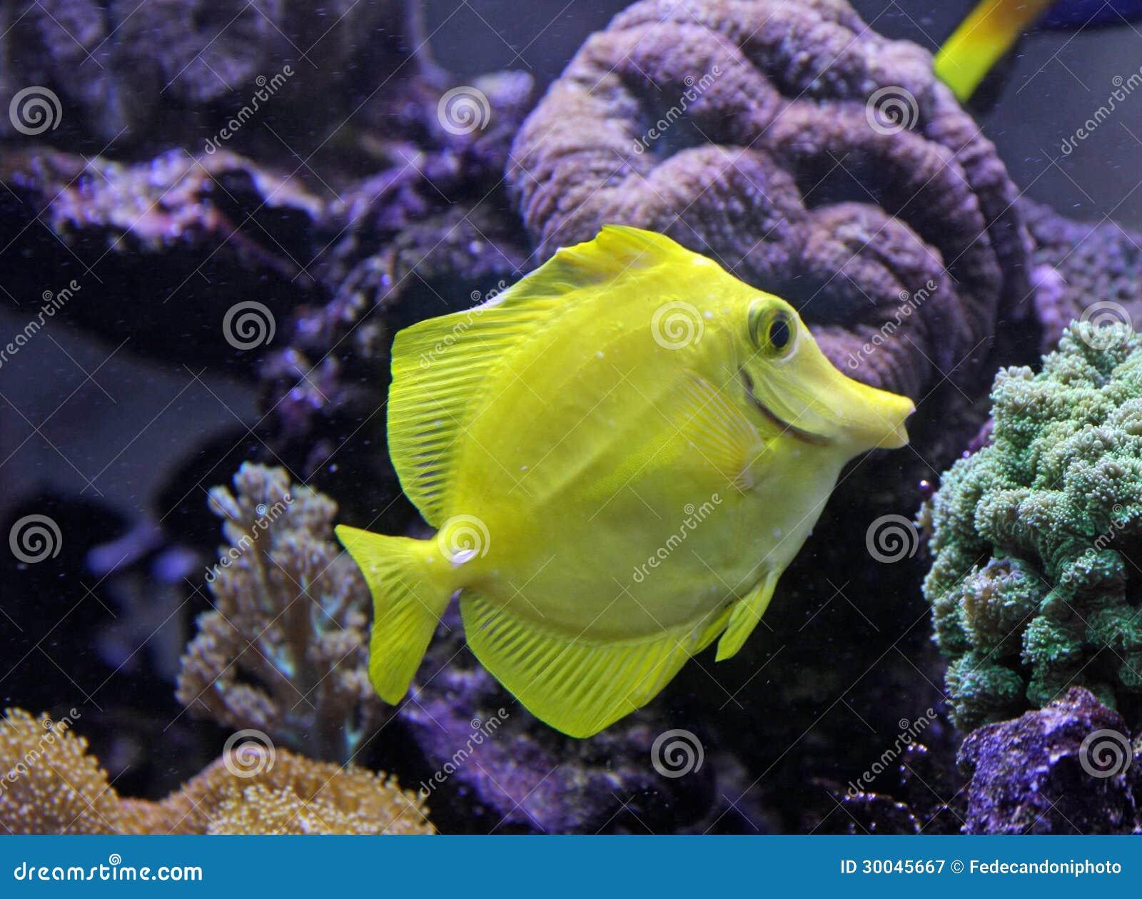 Beautiful tropical fish swimming in an aquarium royalty for Beautiful tropical fish