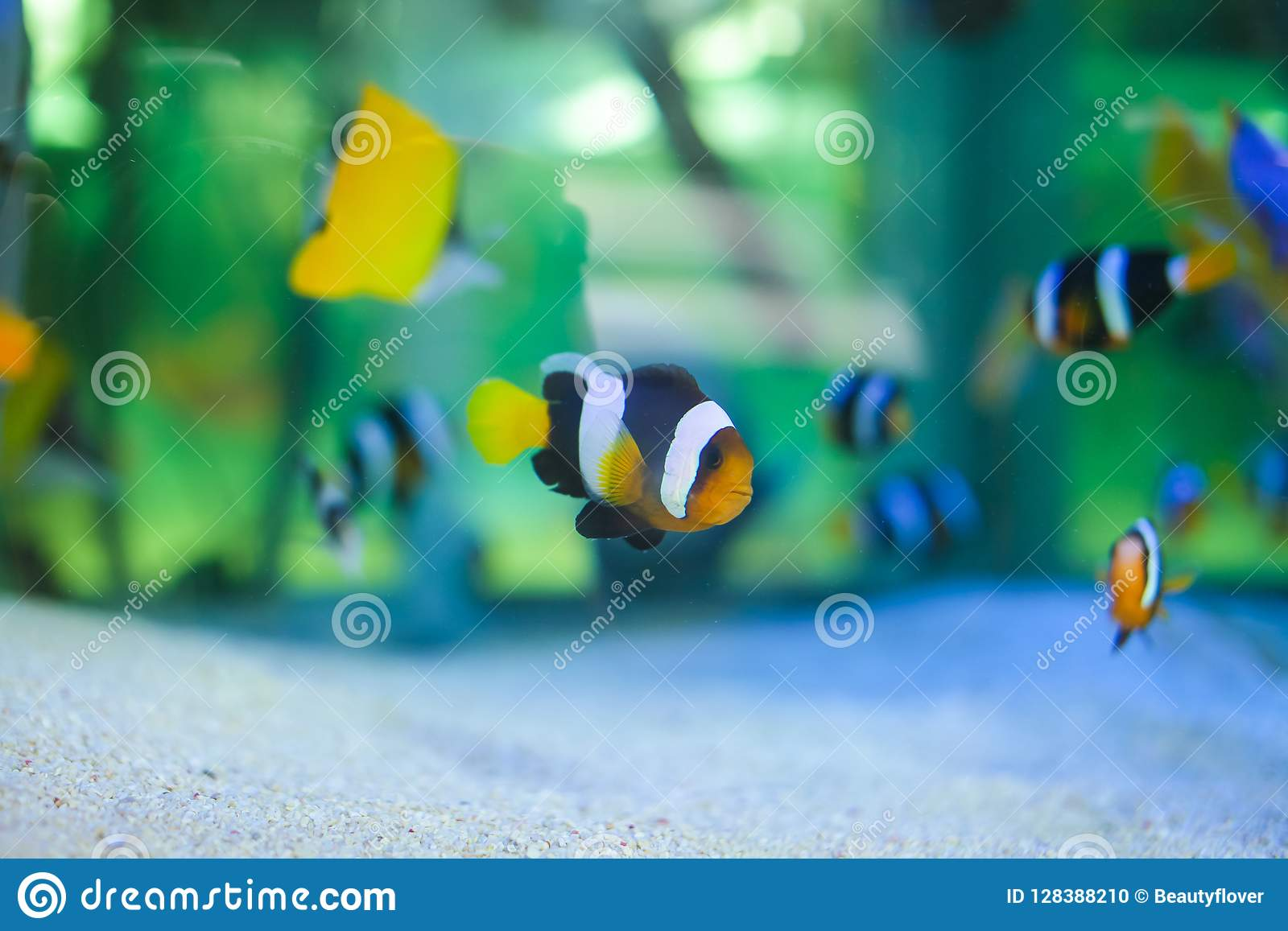 Beautiful Bright Tropical Fishes In Aquarium For Sale On Fish Market