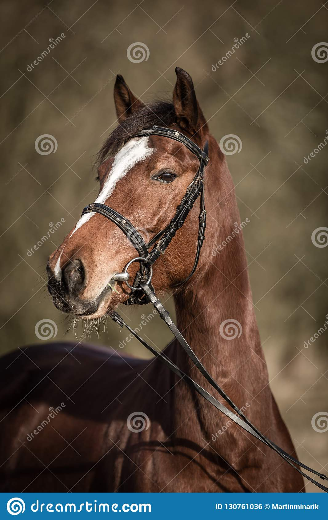 Beautiful brown horse portrait with bridle in the spring forest
