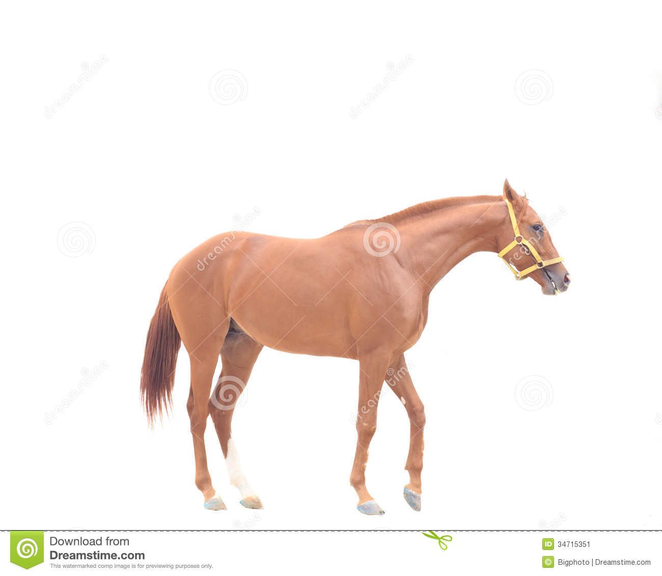 Beautiful Brown Horse On A White Background Stock Image ...