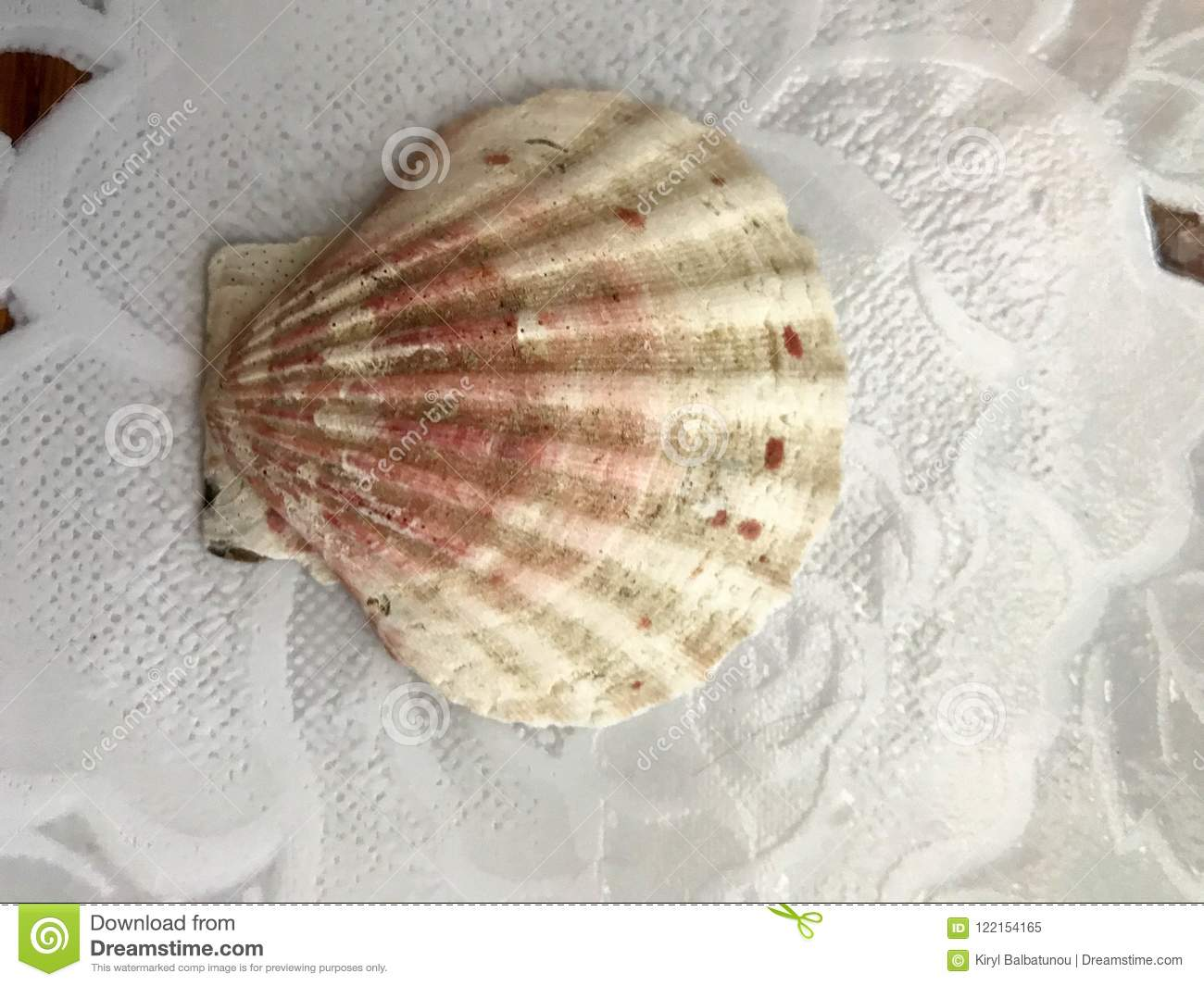 Beautiful brown sea scallop, shell lies on a white background of tissue. Marine tropical summer background