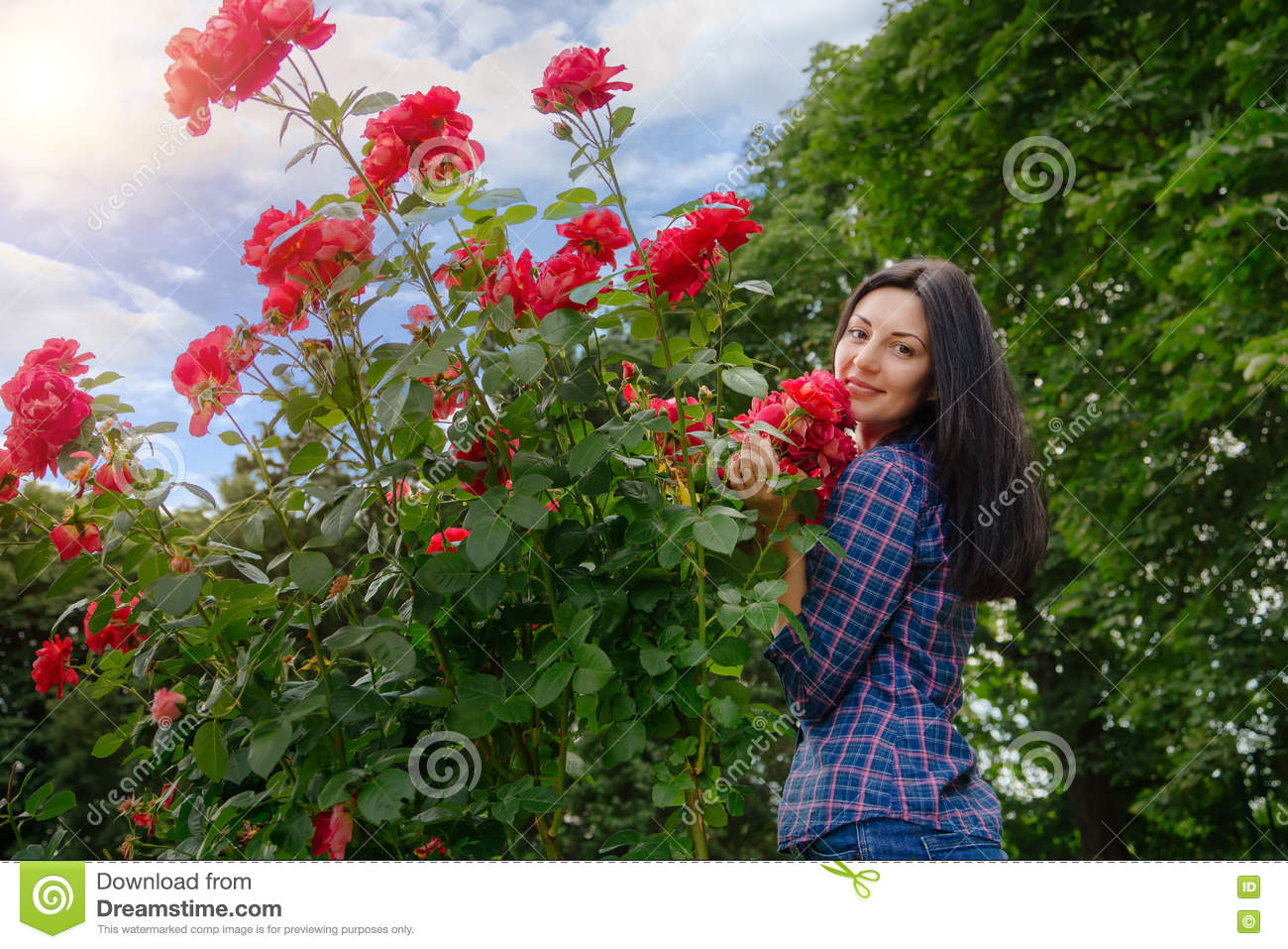 Royalty Free Stock Photo. Download Beautiful Brunette Woman Posing In A Red  Rose Garden ...