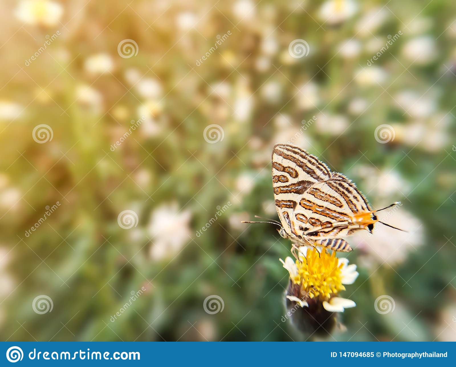 Beautiful butterfly on flower grass and sunlight during the daytime. Blurred image natural background.